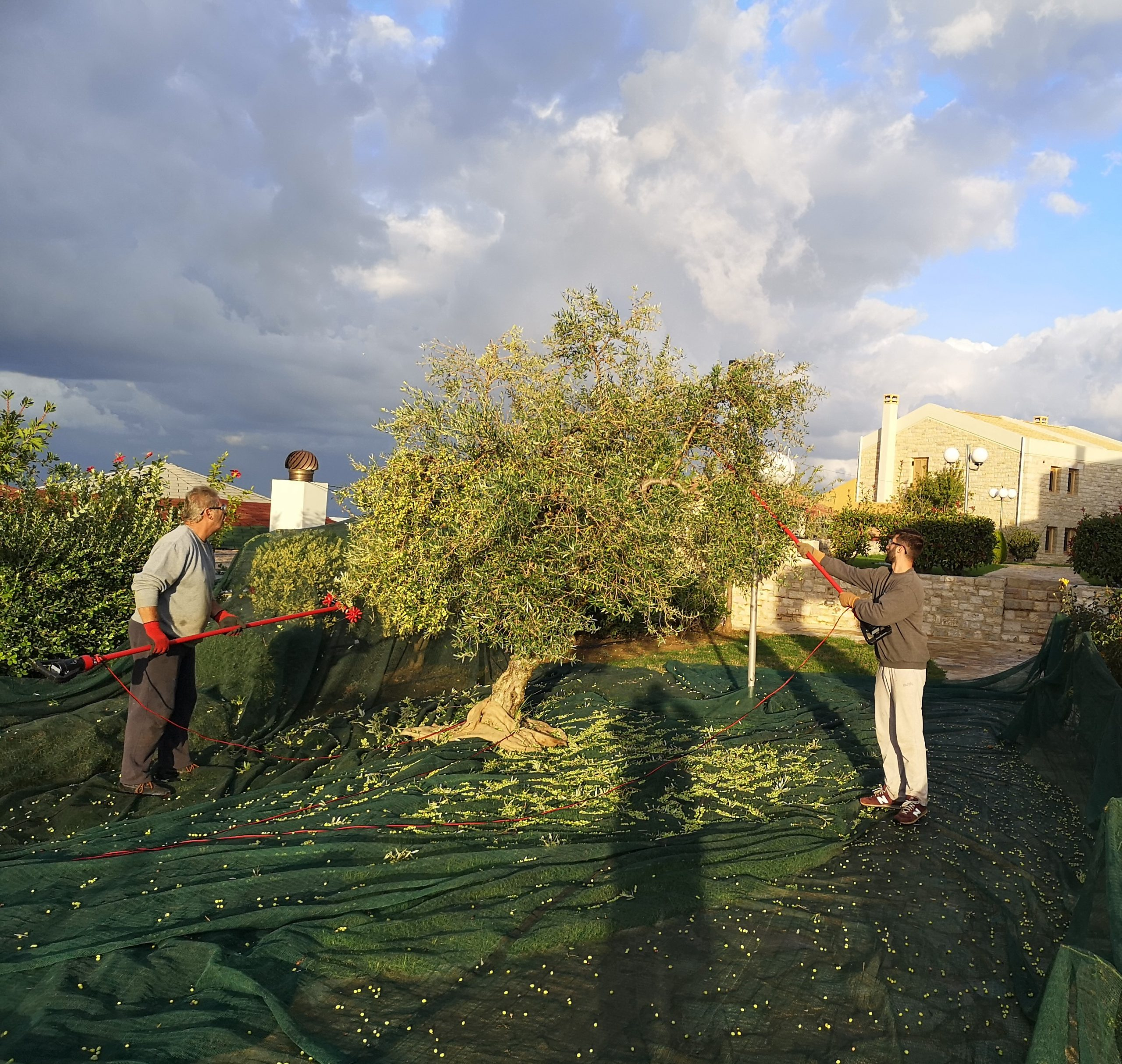 Our family harvesting time