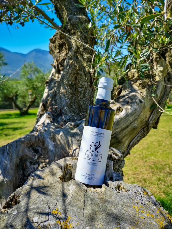 extra virgin olive oil bottle olive tree